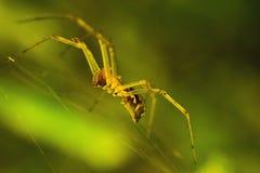 Makro- pająk sztuki styl Fotografia Stock
