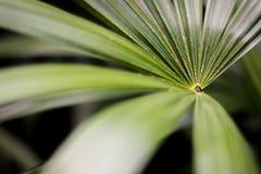 Makro- Paprociowa roślina Zdjęcia Royalty Free