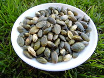 Makro Pepita Seeds i grönt gräs arkivfoto