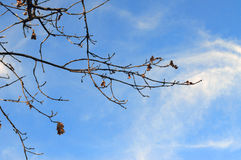 Makro- photoshoots kwiatu drzewo Fotografia Stock