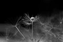 Makro- piłki na kwiacie inside zdjęcie stock