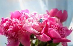 Makro- pierścionek Zdjęcie Royalty Free