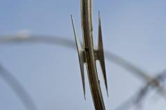 makro- razorwire Fotografia Stock