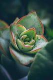 Makro- roślina Obraz Royalty Free