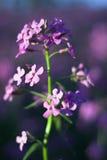Makro rosafarbene wilde Blumen stockbild