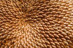 makro- słonecznik Fotografia Stock