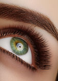 Makro schönes weibliches Auge der Nahaufnahme mit den extremen langen Wimpern Peitschendesign, natürliche Gesundheitspeitschen Sä Stockfotografie