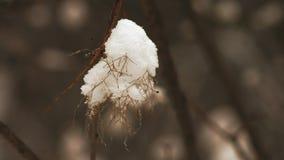 Makro snö på en Bush i skogen arkivfilmer