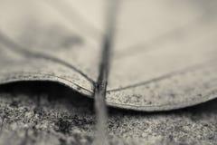 Makro som är nära upp av det döda bladet för detalj som ligger på golvet i svartvitt arkivfoto