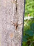 Makro som är nära upp av drakefluga på träbakgrundsstolpesympetrum Royaltyfria Bilder