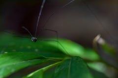 Makro som är nära upp av en liten förkroppsligad spindel Royaltyfri Fotografi