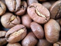 Makro som är nära upp av kaffebönor Arkivfoton