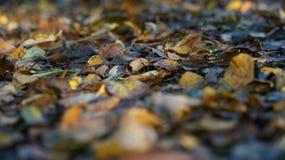 Makro som skjutas av bruna och gula Autumn Dead Leaves på jordningen i en skog fotografering för bildbyråer
