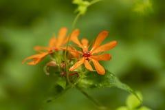 Makro som skjutas av den orange blomman i mjuk fokus arkivfoton