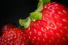 Makro som skjutas av den röda saftiga jordgubben på svart bakgrund Söt skördad bärbakgrund, sund matlivsstil royaltyfri bild