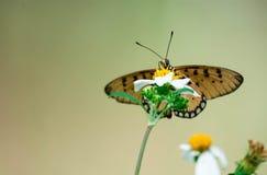 Makro som skjutas av en gul blomma med oskarp fjärilsbakgrund med den oskarpa gröna miljön fotografering för bildbyråer