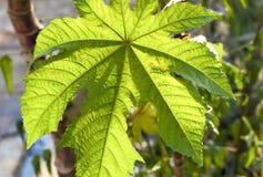 Makro som skjutas av ett härligt grönt blad royaltyfri bild