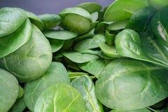 Makro som skjutas av gröna spenatblad Grupp av spenatgrönsakblad som överst staplas av de Stads- bruka, sunt äta royaltyfri foto