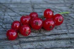Makro- sprig czerwoni rodzynki Zdjęcia Royalty Free