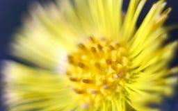 Makro- strzał żółty kwiat Zdjęcia Royalty Free