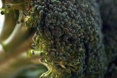 Makro- strzał brokułu floret w świetle dziennym Fotografia Royalty Free