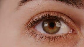 Makro- strzał brown kobiety oko zbiory