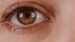 Makro- strzał brown kobiety oko zdjęcie wideo