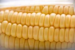 Makro- strzał dojrzałe kukurydzane adra Fotografia Stock