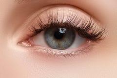 Makro- strzał kobiety piękny oko z niezwykle tęsk rzęsy Seksowny widok, zmysłowy spojrzenie Żeński oko z długimi rzęsami Zdjęcia Royalty Free