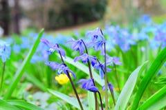 Makro- strzał malutcy purpurowi kwiaty obrazy royalty free