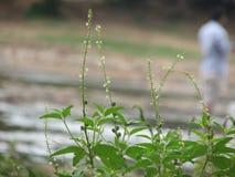 Makro- strzał roślina Fotografia Royalty Free