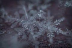 Makro- strzał Zamarznięci płatek śniegu 2 zdjęcie royalty free