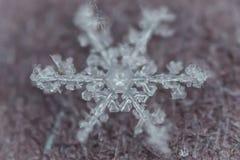 Makro- strzał Zamarznięty płatek śniegu 5 obrazy royalty free