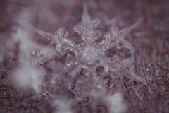 Makro- strzał Zamarznięty płatek śniegu 6 fotografia royalty free