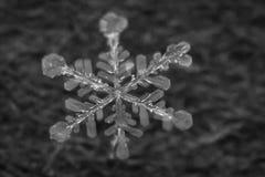Makro- strzał Zamarznięty płatek śniegu 7 zdjęcia stock