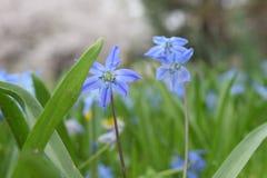 Makro- strza? malutcy purpurowi kwiaty obraz royalty free