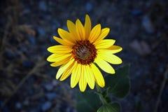 Makro- szczegółowy widok kwiat, drzewa i świrzepy flora wzdłuż jordanu śladu w Wasatch, Stać na czele Salt Lake City obraz stock