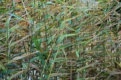 Makro- szczegółowy widok kwiat, drzewa i świrzepy flora wzdłuż jordanu śladu w Wasatch, Stać na czele Salt Lake City fotografia royalty free