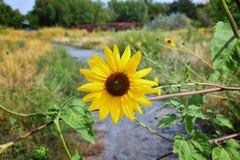 Makro- szczegółowy widok kwiat, drzewa i świrzepy flora wzdłuż jordanu śladu w Wasatch, Stać na czele Salt Lake City zdjęcia stock