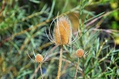 Makro- szczegółowy widok kwiat, drzewa i świrzepy flora wzdłuż jordanu śladu w Wasatch, Stać na czele Salt Lake City obrazy stock