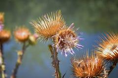 Makro- szczegółowy widok kwiat, drzewa i świrzepy flora wzdłuż jordanu śladu w Wasatch, Stać na czele Salt Lake City zdjęcie stock