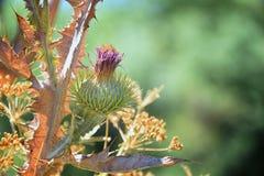 Makro- szczegółowy widok kwiat, drzewa i świrzepy flora wzdłuż jordanu śladu w Wasatch, Stać na czele Salt Lake City zdjęcia royalty free