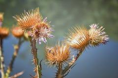 Makro- szczegółowy widok kwiat, drzewa i świrzepy flora wzdłuż jordanu śladu w Wasatch, Stać na czele Salt Lake City fotografia stock