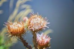 Makro- szczegółowy widok kwiat, drzewa i świrzepy flora wzdłuż jordanu śladu w Wasatch, Stać na czele Salt Lake City obrazy royalty free