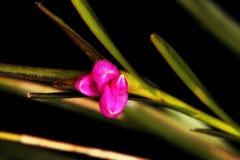 Makro- szczegóły bardzo mały storczykowy kwiat obrazy stock