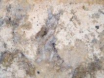 Makro- tekstura żyłkowana skała - kamień - Obrazy Stock