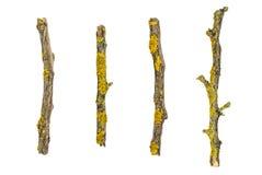 Makro trockene Baumaste lokalisiert auf weißem Hintergrund, Beschaffenheit Stockfotos