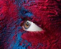 Makro- und kreatives Make-upthema der Nahaufnahme: Schönes weibliches Auge mit trockenem Farbenstaubpigment auf Gesichts-, Roter  Lizenzfreies Stockbild