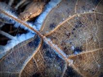 Makro von Frostkristallen auf den Adern eines gefallenen Blattes Stockfoto