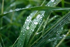 Makro von glänzenden Regentropfen auf Gras stockfotografie